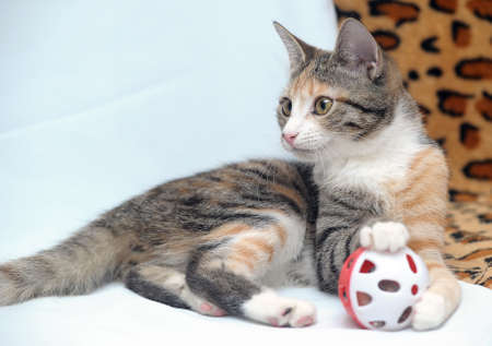 Cute kitten playing with a toy Stock Photo - 18295147