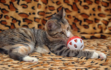 Cute kitten playing with a toy photo