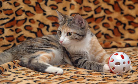 Cute kitten playing with a toy Stock Photo - 18295177