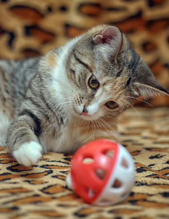 frisky: Cute kitten playing with a toy Stock Photo
