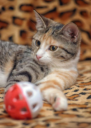 Cute kitten playing with a toy Stock Photo - 18295159