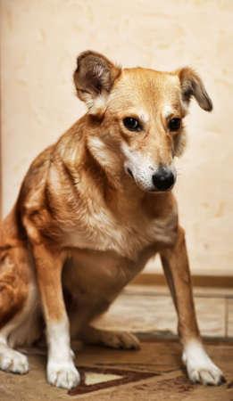 small mongrel dog Stock Photo - 19892120