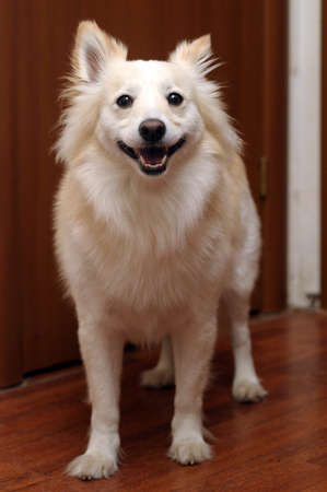 small mongrel dog photo