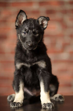 black mongrel puppy photo