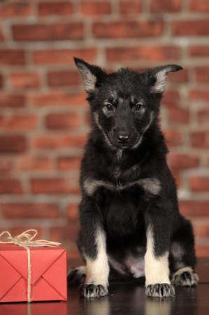 mongrel puppy Stock Photo - 18808997