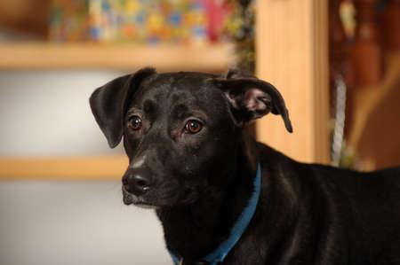 mongrel puppy photo