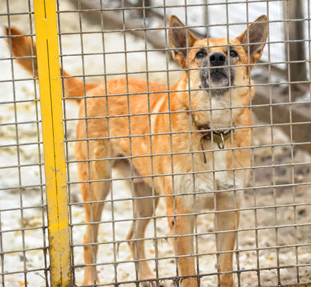 Dog in a shelter Stock Photo - 17928044