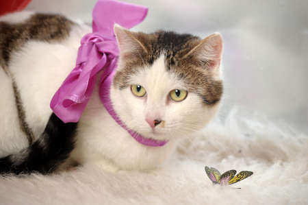 cat with a bow at the neck photo