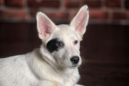 white with black eye mask puppy photo