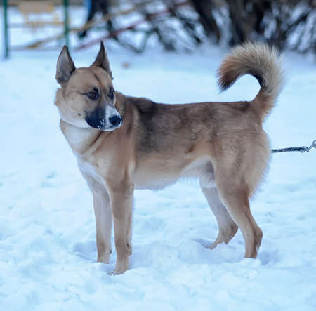 Dog in Snow photo
