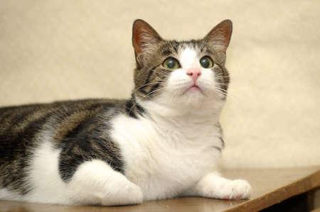 Close-up portrait of adorable cat photo