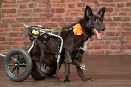 disabled dog photo