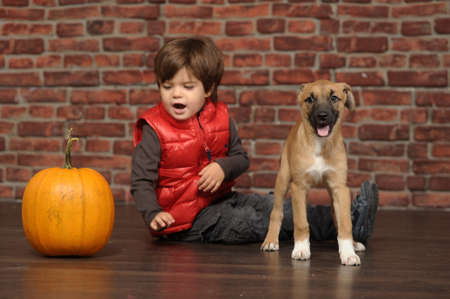 boy with a pumpkin and a puppy photo