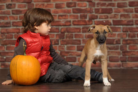 boy with a pumpkin and a puppy Stock Photo - 19901268