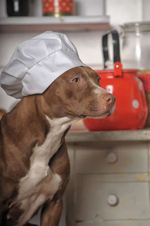 Dog Chef photo