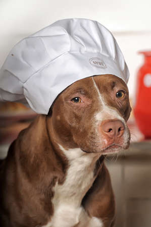 house trained: Dog Chef
