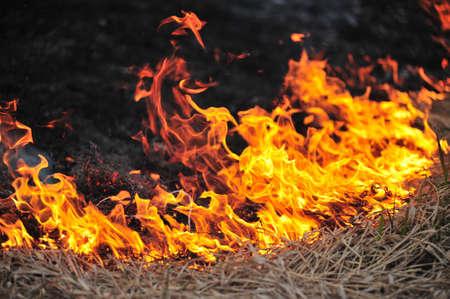 Bush fuego Foto de archivo