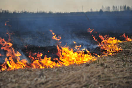burning grass photo