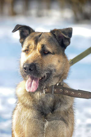 half-breed mongrel dog winter photo