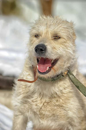 dog white terrier mongrel snow photo