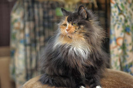 greeneyes: red with black fluffy cat