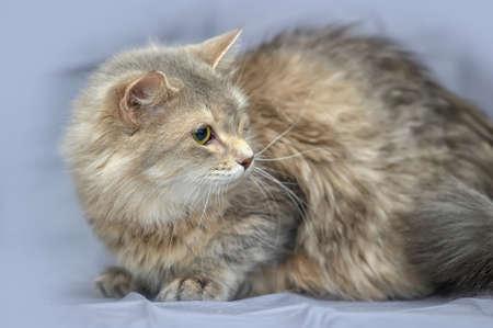 gray fluffy cat photo