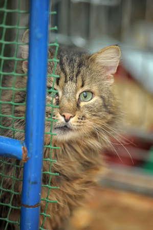 furred: curious  cat peeking
