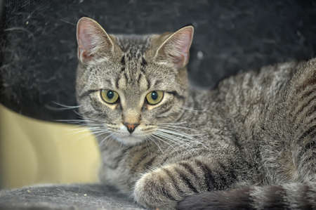 beautiful young tabby cat photo