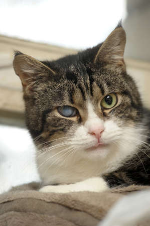 cat with a bad eye Stock Photo - 18801319