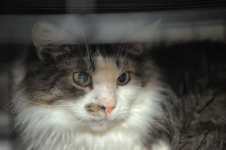 A cat sits in its cage photo