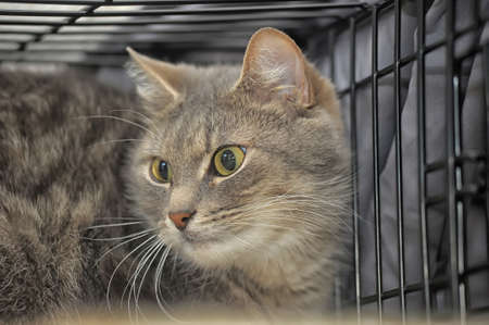 gray cat in a cage photo