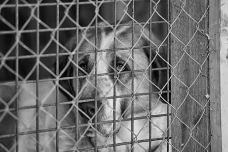inhumane: dog in a shelter Stock Photo
