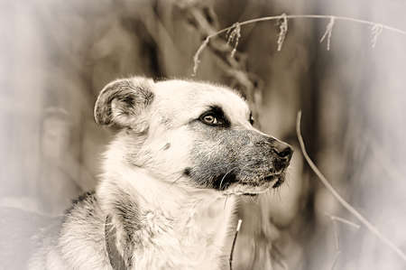 Half-breed dog photo