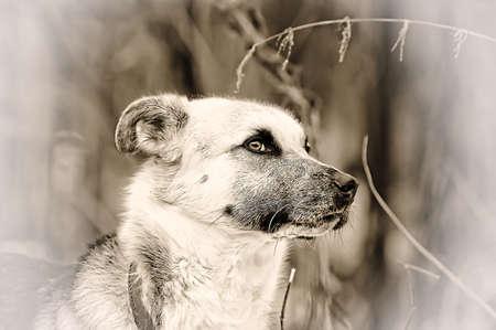 Half-breed dog photo