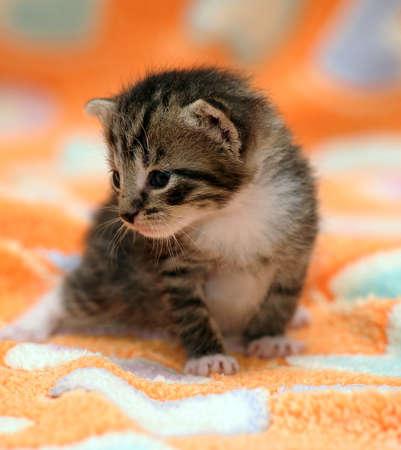 little kitten Stock Photo - 19285963