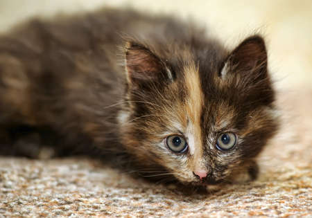 beautiful kitten photo