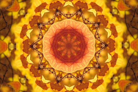 kaleidoscope of autumn leaves photo