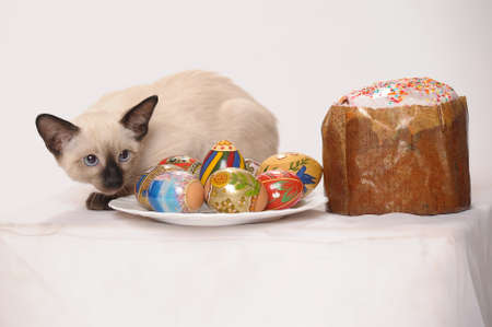 siamese kitten with easter eggs photo