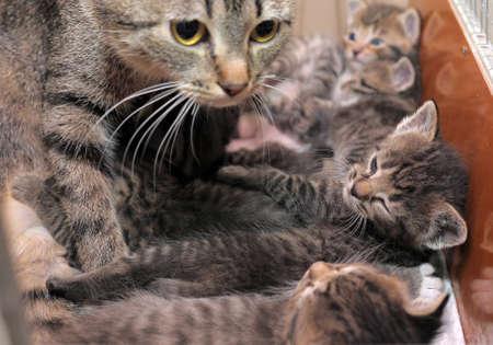 母猫子猫ストライプ 写真素材