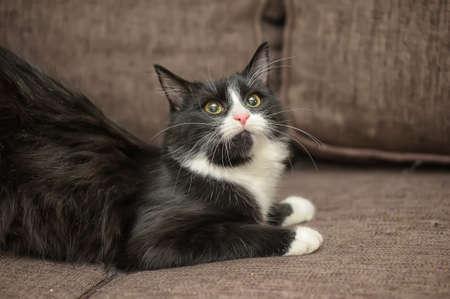 catlike: black and white kitten Stock Photo