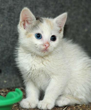 amusant: petit chaton amusante