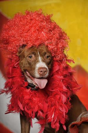 doggy position: Circus dog