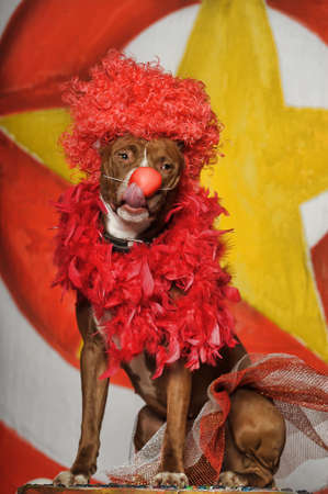 circus dog Stock Photo - 19267519