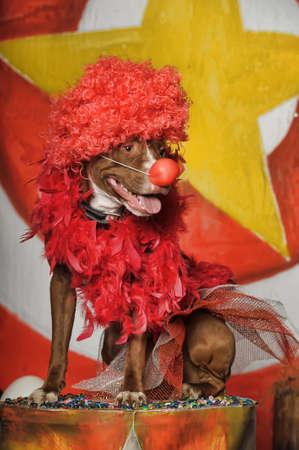 circus dog Stock Photo - 19267522