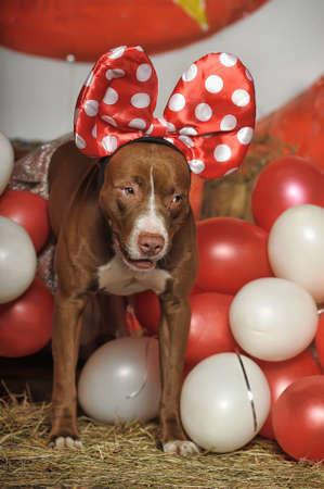 circus dog Stock Photo - 19267518