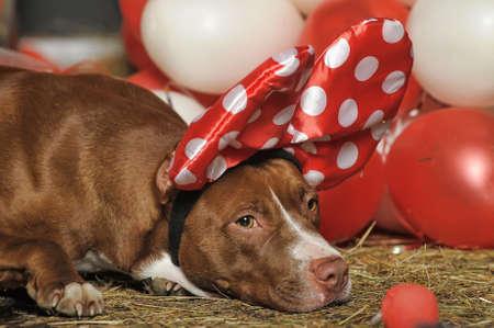 circus dog Stock Photo - 19267511