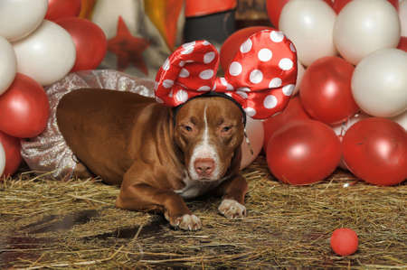 circus dog Stock Photo - 19267516