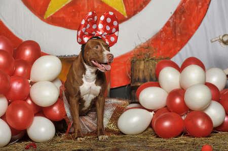 circus dog Stock Photo - 19204215