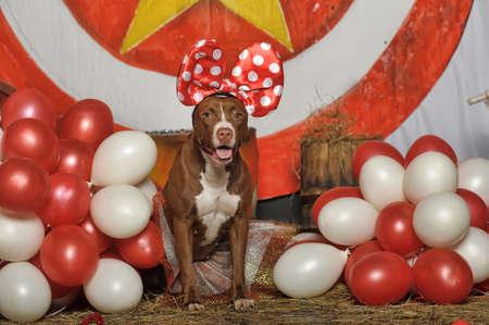 circus dog Stock Photo - 19204216