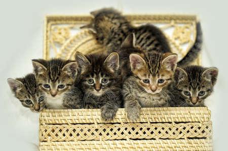diminutive: many kittens in a basket Stock Photo